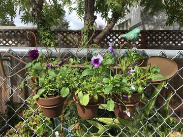 Selling: Hanging Bird Trio Planters