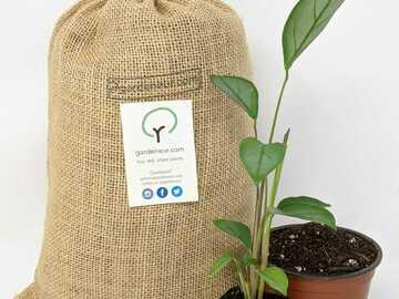 Selling: Gardeneur soil mixes