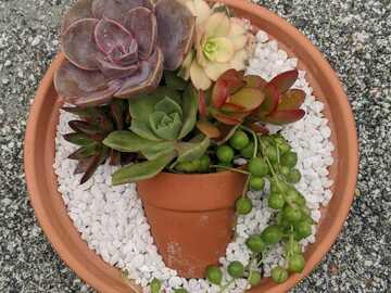 Selling: Pot in a pot succulent Arrangement
