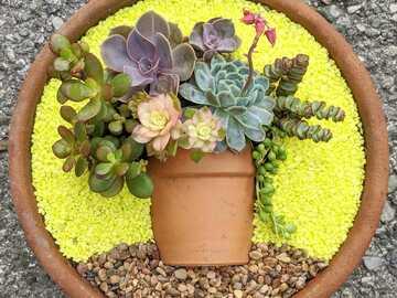 Selling: Custom pot in a pot succulent arrangement