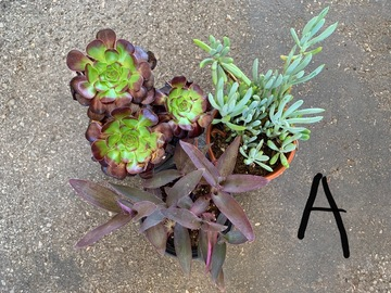 Selling: Container gardening mixed plants