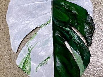 Selling: Monstera Leaf Sculpture