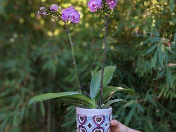 Selling: Orchid Planter in turquoise and purple
