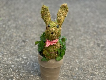 Selling: English Ivy Bunny shaped Topiary