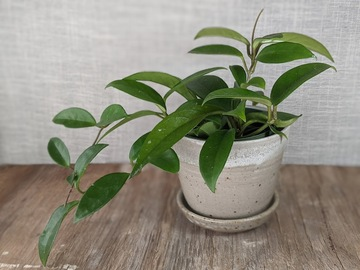 Selling: Planter in white glaze, #21-28
