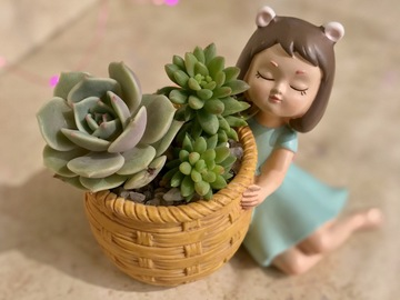 Selling: Fairy girl succulent arrangement.