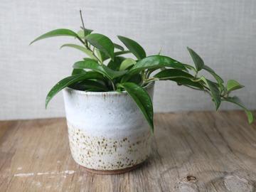 Selling: beautiful white handmade cover pot, #21-61