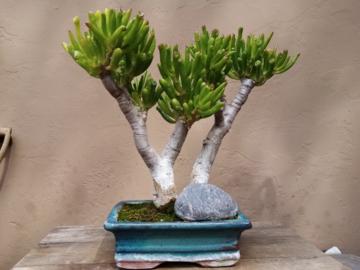 Selling: Gollum Jade