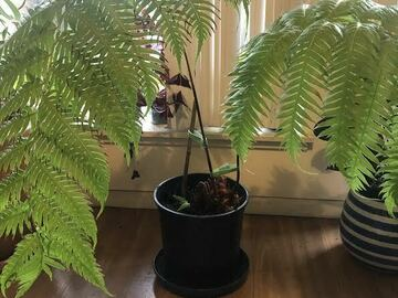 Selling: Finding Ferns, Fronds