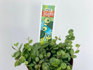 Selling: Peperomia Prostrata String of Turtles