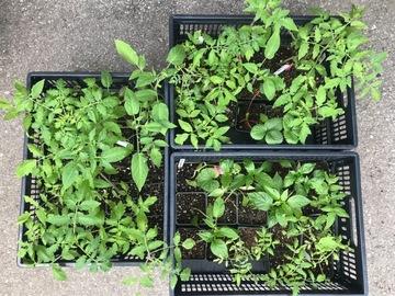 Giving away: FREE Seedlings