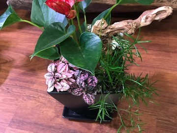 Selling: Houseplants arrangement in ceramic pot