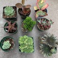 Selling: Mix and match succulents