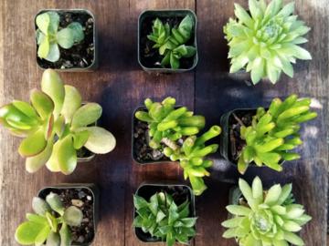 Selling: Assortment of 9 Succulents