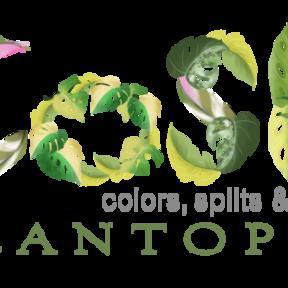 CoSH Plantopia